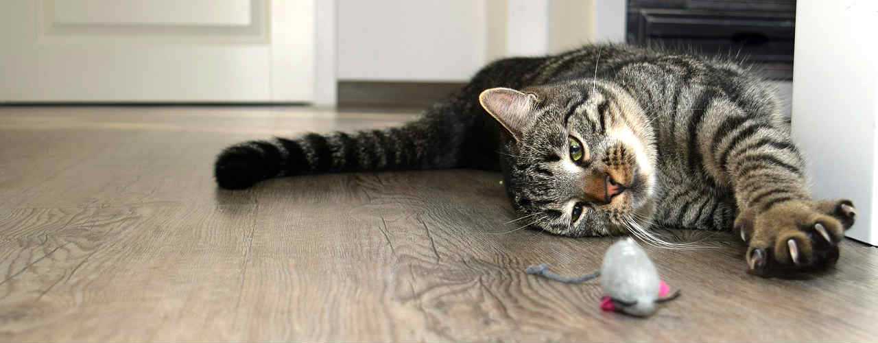 deshidratación-gatos