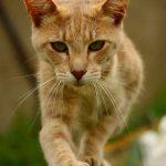 gato haciendo equilibrios