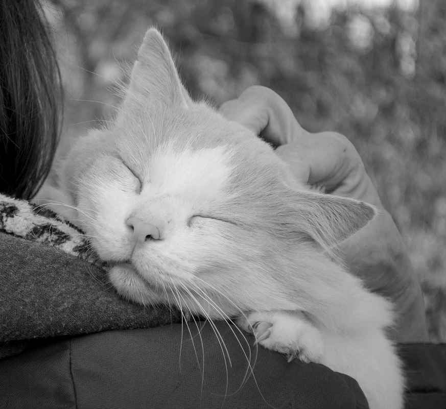 mejor-lugar-acariciar-gato
