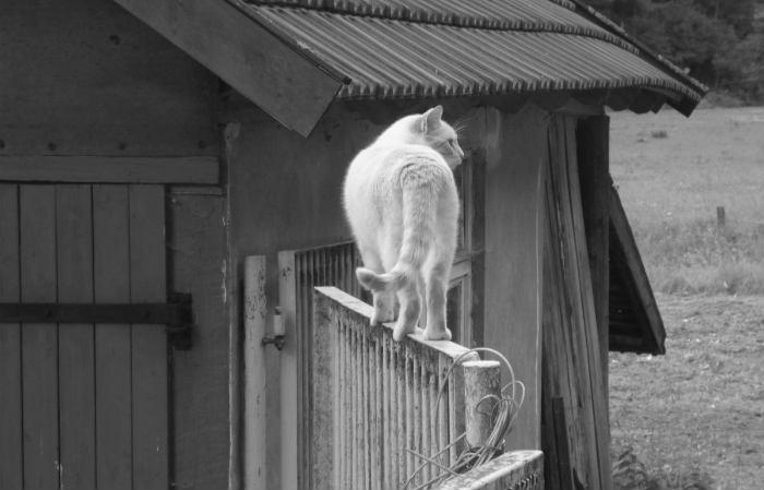 cola gato equilibrio
