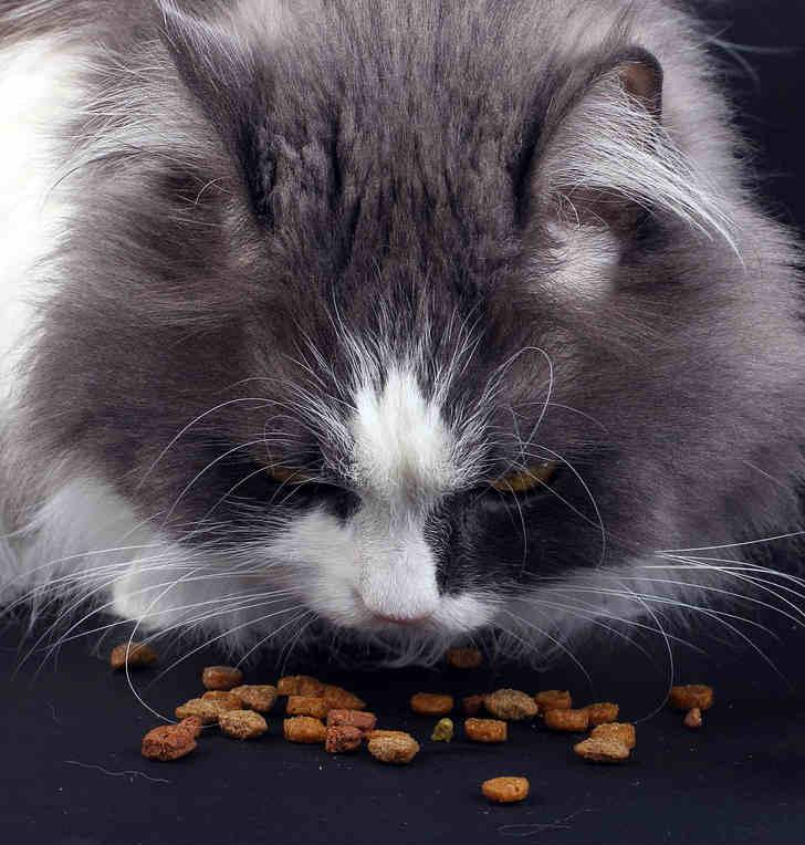 mejor-comida-gatos
