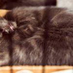 gato durmiendo en arenero