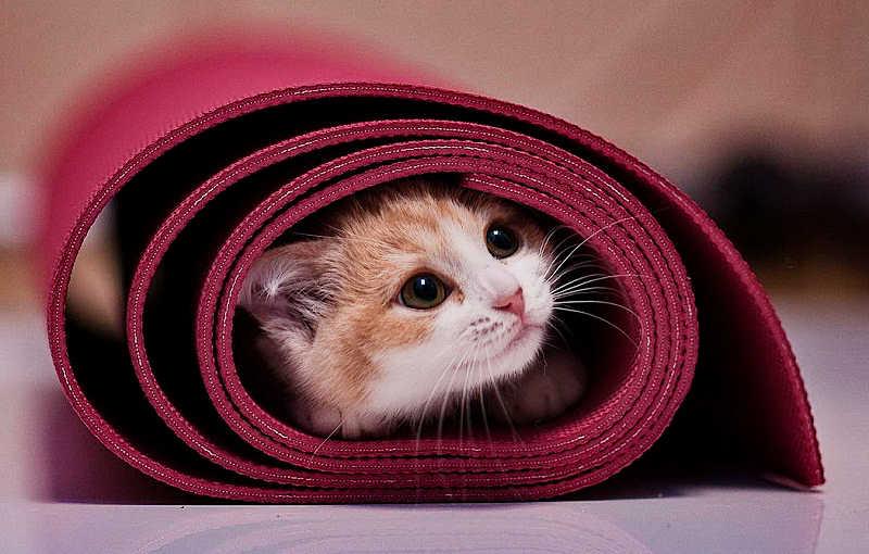 porque-gato-se-esconde