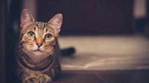 consejos-mantener-feliz-gato-interior