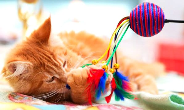 gatito-jugando-juguete