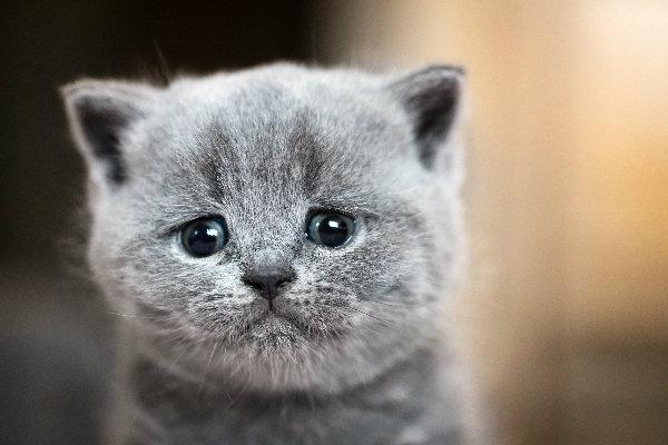 gato llorando