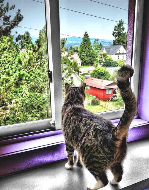 gato-mirando-por-la-ventana