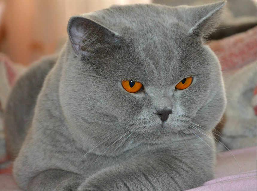 gato anciano obeso