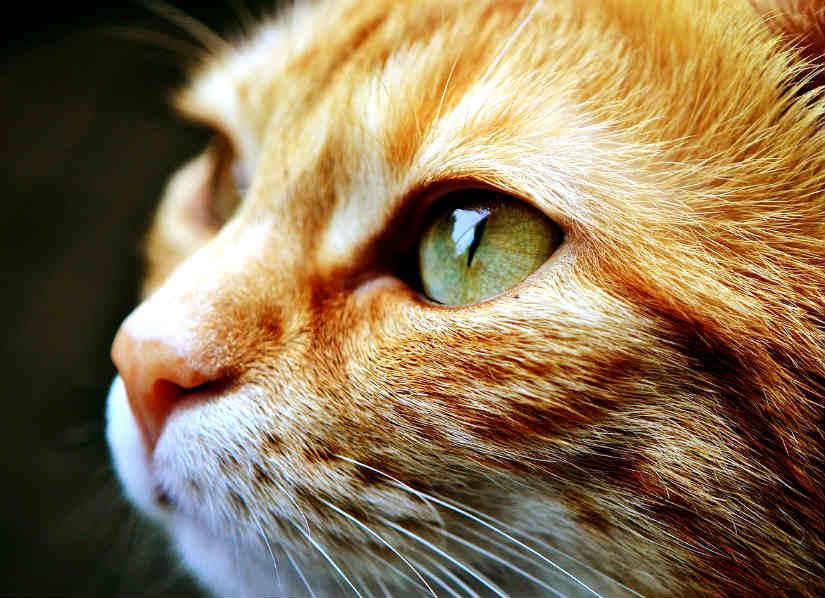 ojos-lenguaje-corporal-gatos