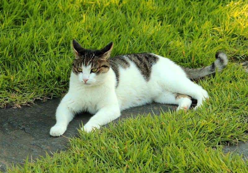 lenguaje-corporal-en-gatos