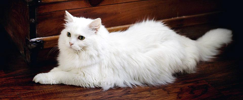 Cuidados del pelo de los gatos