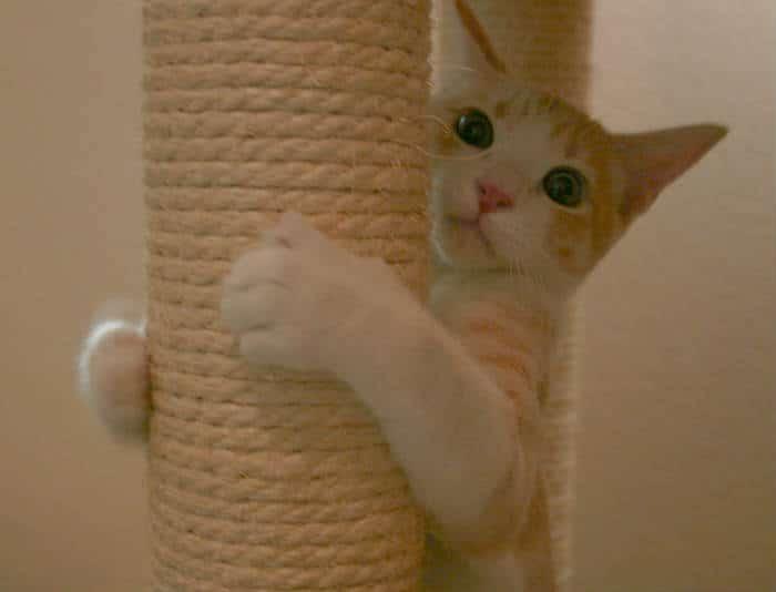 juega con tu gato y su rascador
