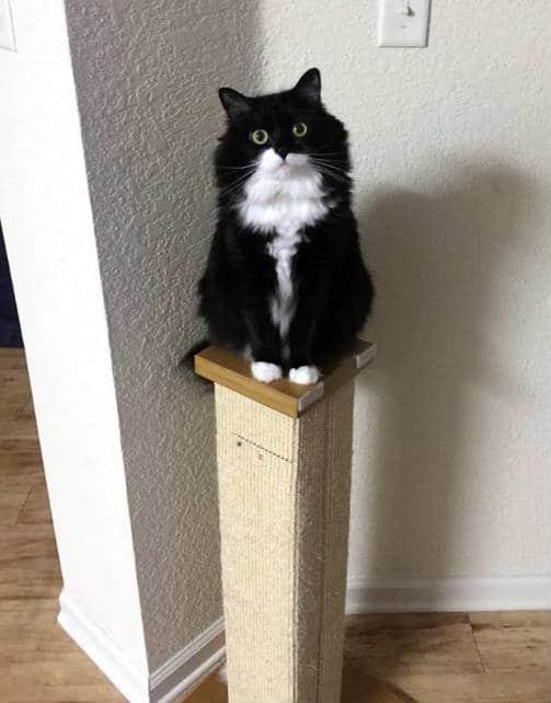 poste rascador ideal para gatos