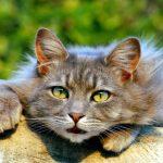lenguaje-postural-gatos