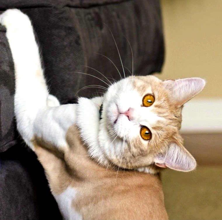 hacer-que-gato-no-rasque
