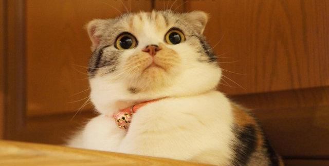gato sorprendido por su nombre