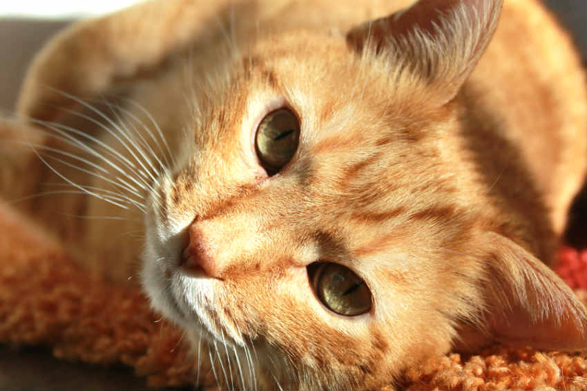 hipo-gatos