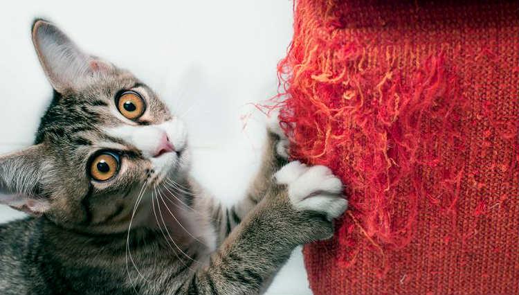 ¿Como evitar que tu gato te rasque los muebles?