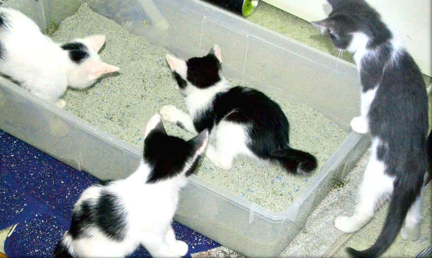 gatos-jugando-arenero