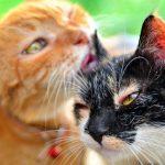 gatos aseandose