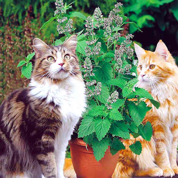 gatos y catnip