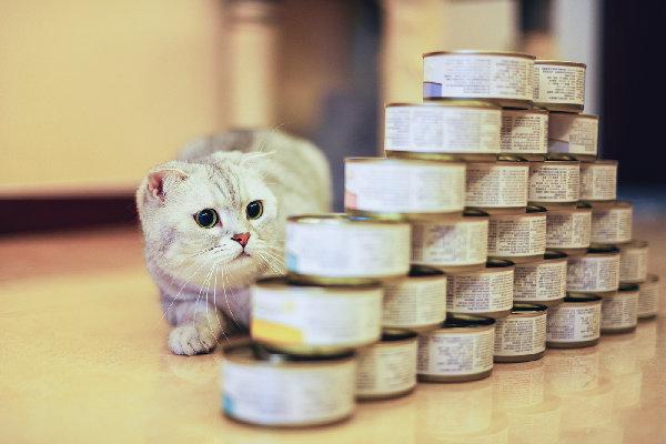 gatos comer atun