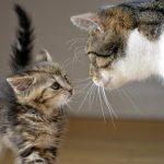conociendo un gatito nuevo