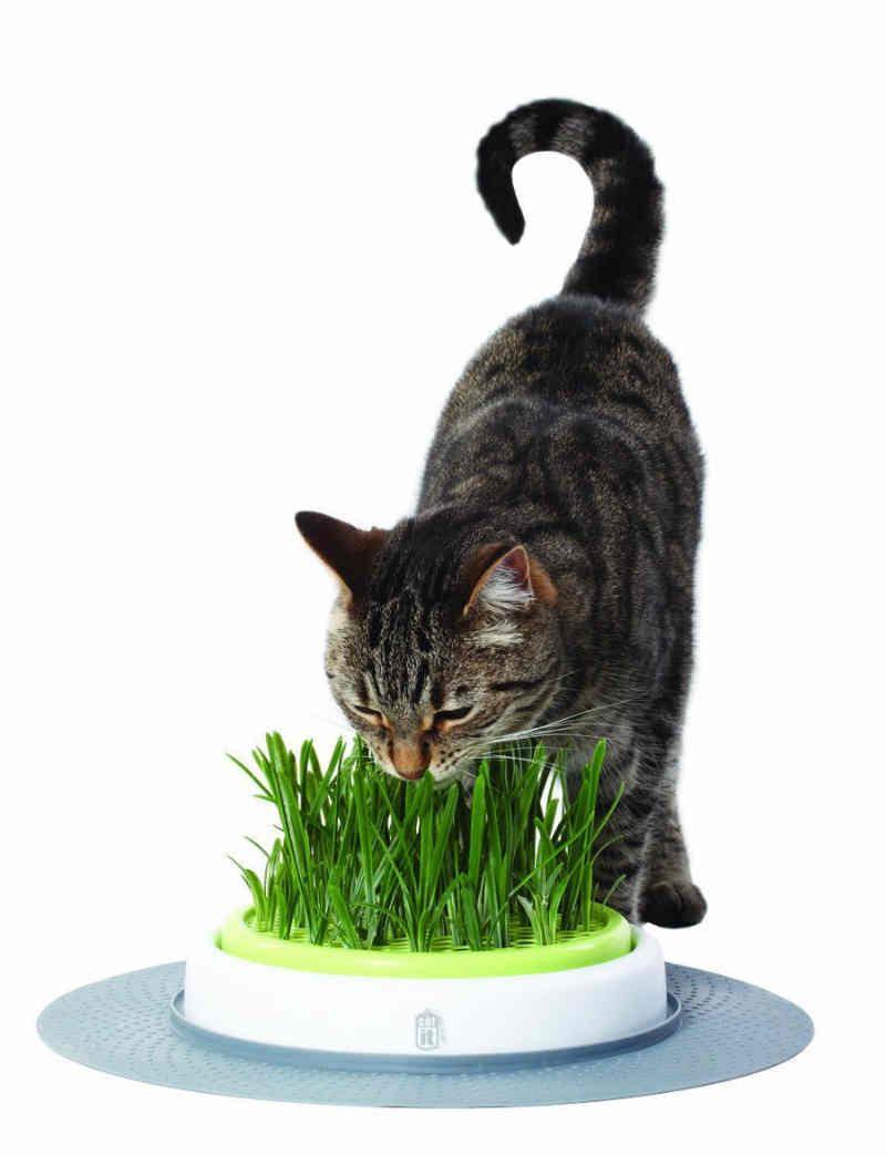 planta-hierba-gatera