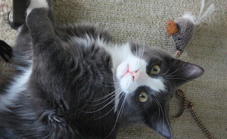 la importancia de los juguetes para gatos