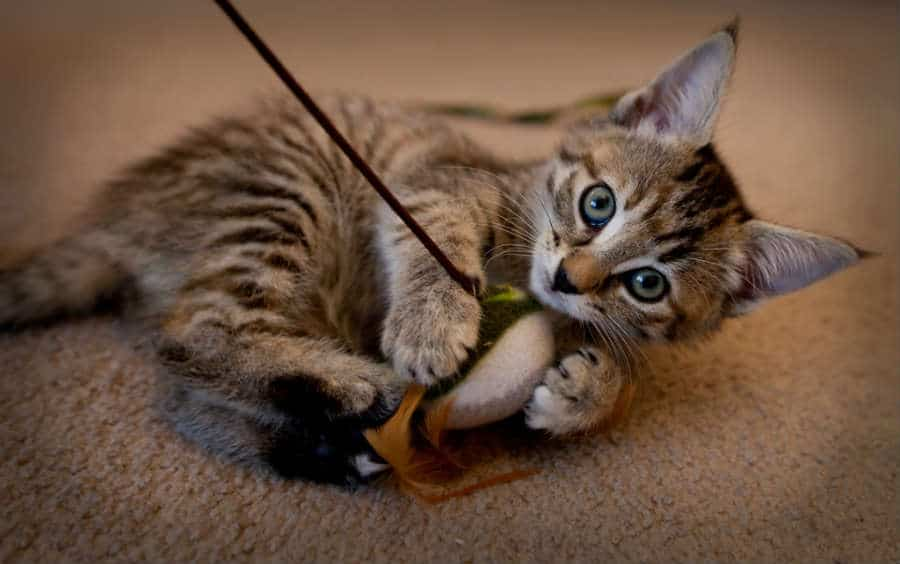 juguete adecuado para gatitos