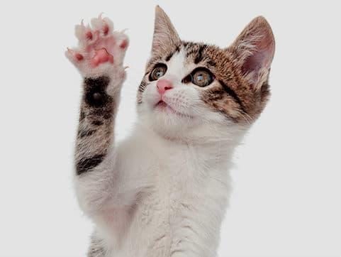 garras de gatito