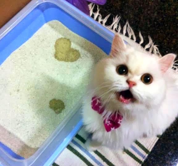 eliminar-olor-orina-gato