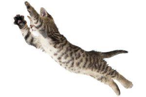 los gatos caen de pie