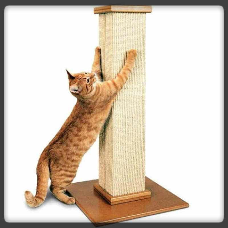 mejor poste rascador para gatos
