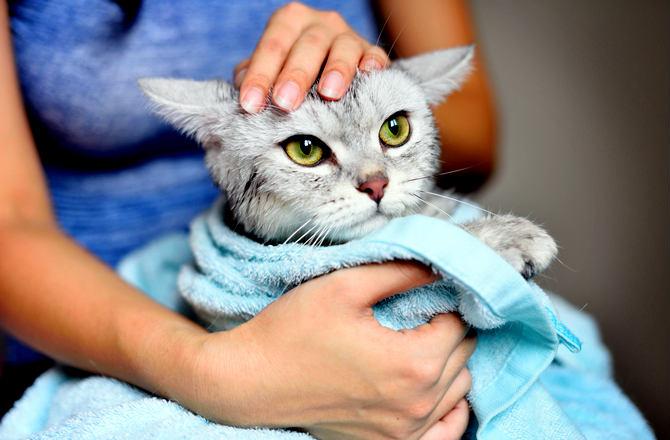 mejorar la piel de tu gato