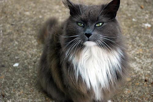 mejorar pelaje gato