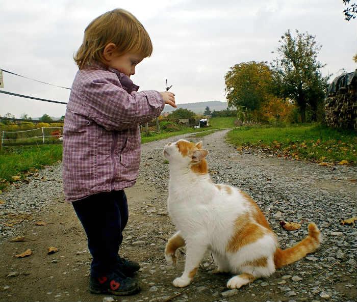 niña pequeña con gato