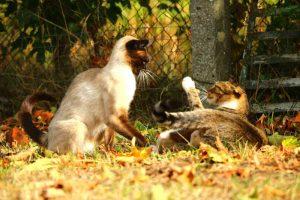 como-parar-pelea-gatos