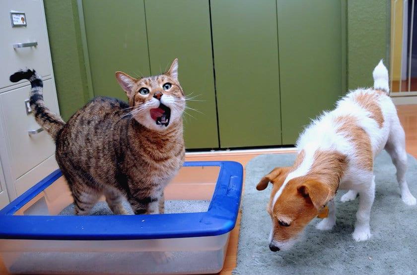 perro-molestando-gato-en-arenero