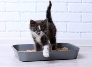 gatito-arenero-pequeño