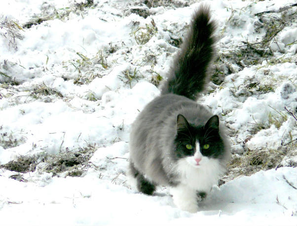por que los gatos tienen cola