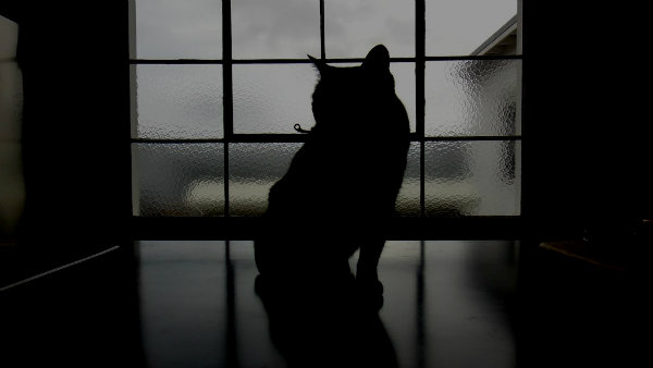 por que mi gato maulla por la noche