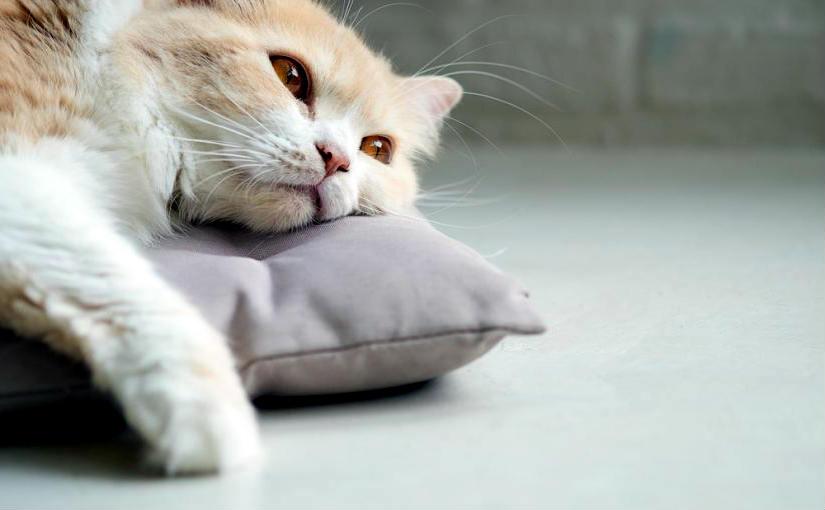 mi gato no come