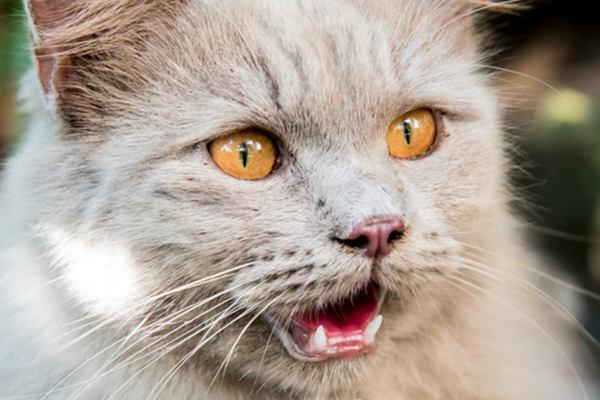 pupilas de los gatos