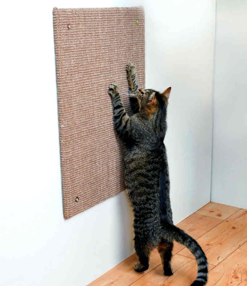 conseguir-gato-deje-rascar
