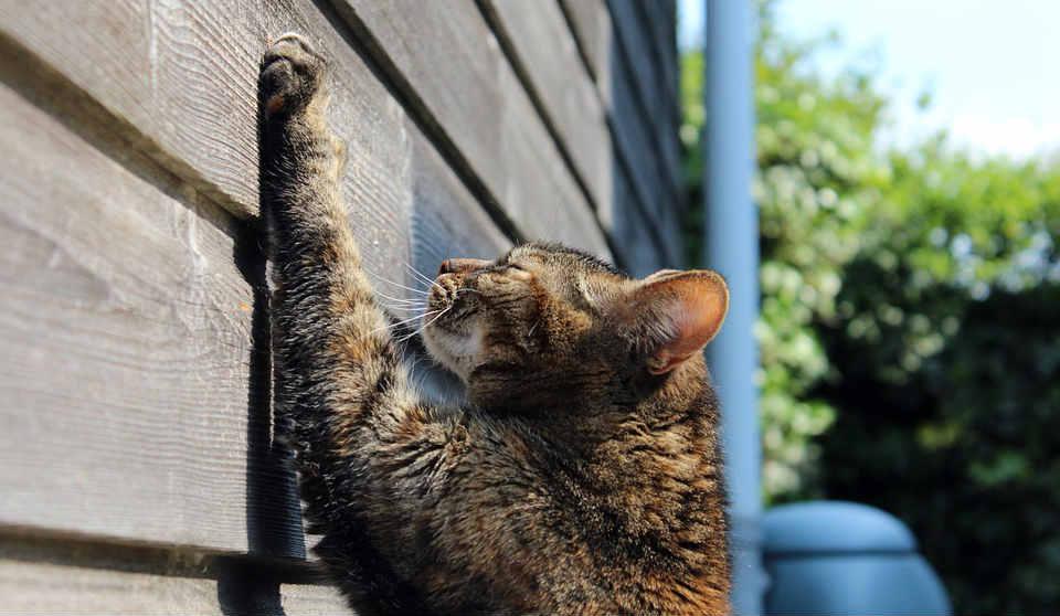 los gatos necesitan rascar