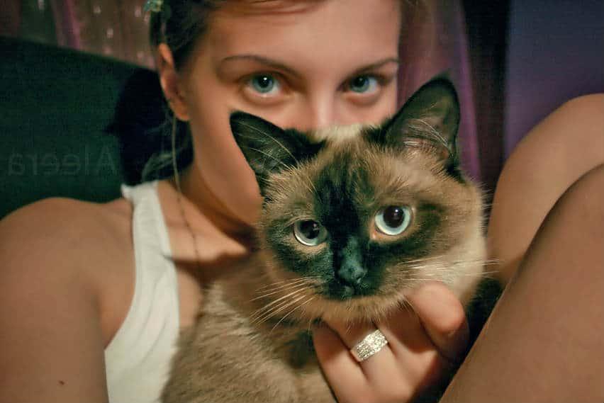 relacion humano gato
