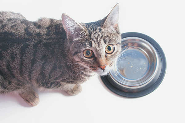maullidos de gato