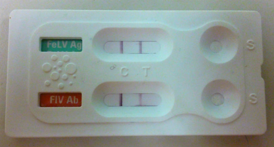 test-leucemia-felina